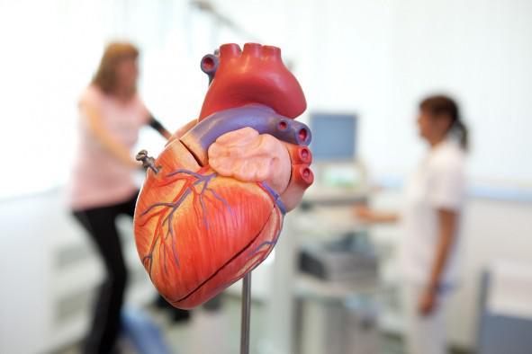 Für ein gesundes Herz und einen funktionierenden Kreislauf | medicos ...